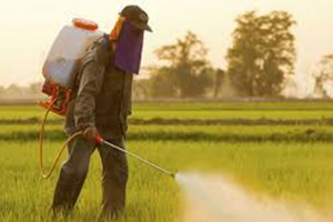 COMMON PESTICIDE MAY POSE RISK TO WORKERS WHO APPLY IT