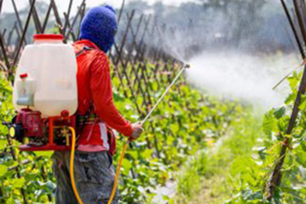 WHY PESTICIDES COULD BE THE BIGGEST RISK POSED BY CORPORATE AGRICULTURE