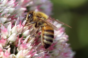 CUT-DOWN ON BEE KILLING PESTICIDES?